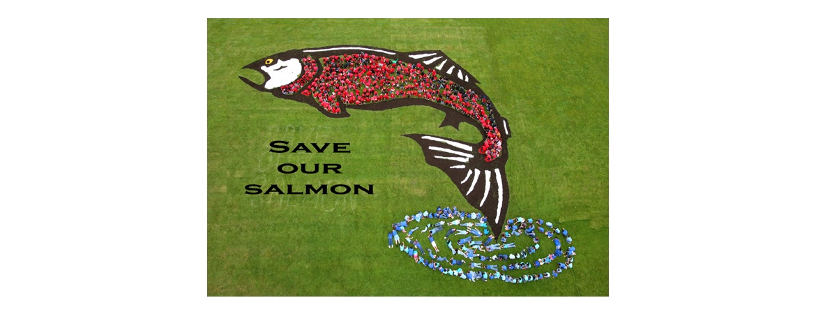 Save or Salmon