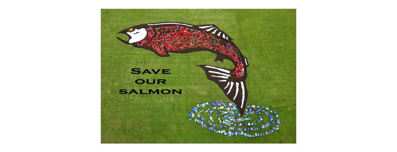 Save or Salmon