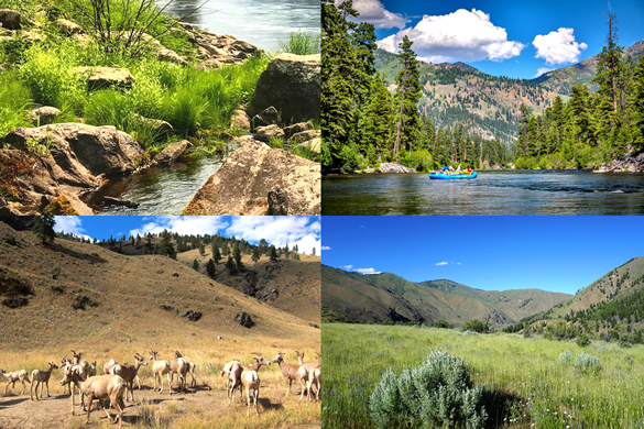 Ecosystems of Middle Fork Salmon river Idaho desert, forest, grasslands, marsh
